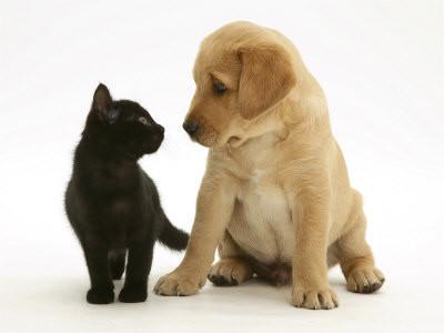 Comment gu rir naturellement la diarrh e chez les chiens for Repulsif chien et chat exterieur