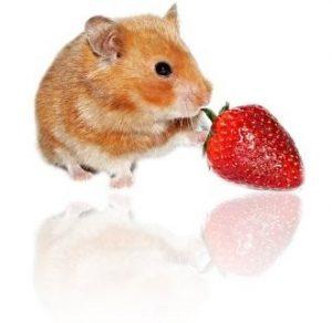 alimentation-hamster2