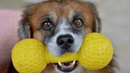 jouets-pour-chien