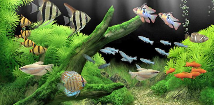 Achat Poisson D Aquarium comment acheter des poissons d'aquarium ? – mon-chiot